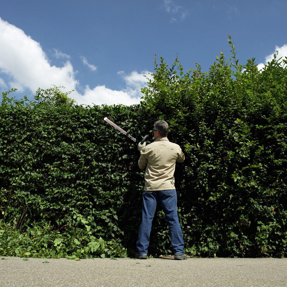 bosch ahs 54 20 li 36v 54cm cordless li ion hedge trimmer. Black Bedroom Furniture Sets. Home Design Ideas